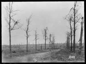 The Wulverghem Road looking towards Messines, World War I