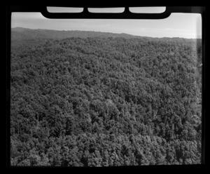 Henderson and Pollard forestry, Te Whaiti, Whakatane District