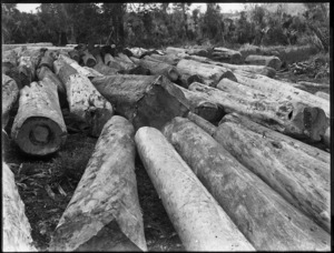Kauri logs, Northland