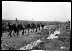 Mules carrying ammunition to the New Zealand guns on the Western Front, World War I