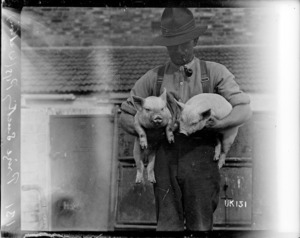 Prize suckling pigs, Walton, World War I