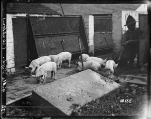 Little piggies, Walton, World War I