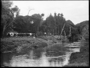 Clearing land along the (Awanui?) river near Kaitaia