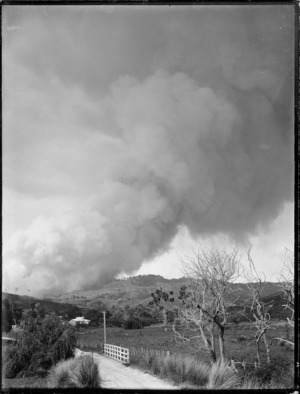 Clearing land by fire, Northland