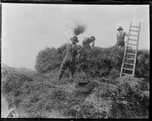 New Zealand soldiers helping with the harvest in World War I