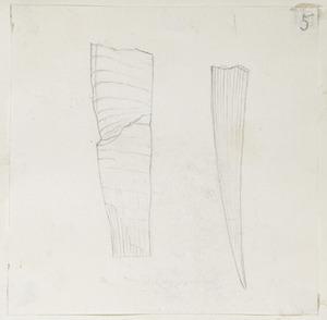 [Buchanan, John], 1819-1898 :[Unidentified fossils. ca 1856-1890]