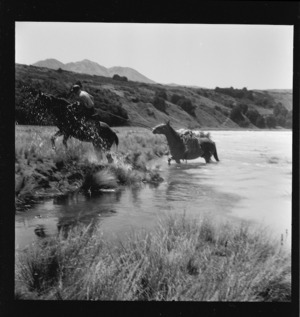 Packhorses climbing out from the Rakaia River