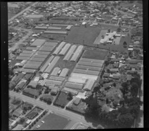 Wong and Guthrie horticultural land, with glasshouses, Favona, Mangere, Auckland