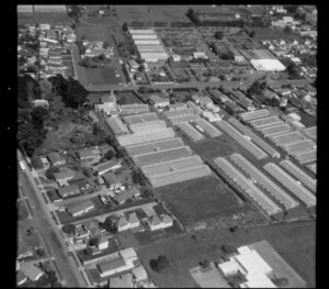 Wong and Guthrie, horticultural land in Favona, Mangere, Auckland