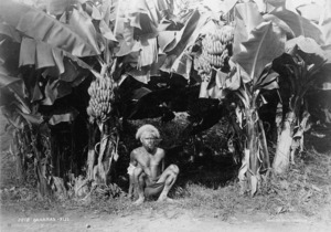 Man in front of banana trees, Fiji