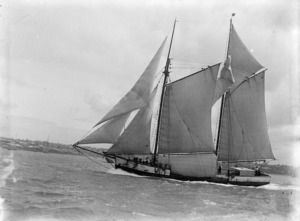 The scow Rimu