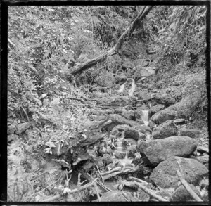 Small stream trickling down mossy boulders, including fern, location unknown