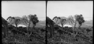 Man leaning on cabbage tree on scrubby hillside, including coastal view, Black Head, Otago Peninsula, Dunedin, Otago Region