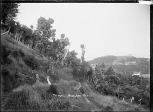 Landscape in Titirangi, with native bush
