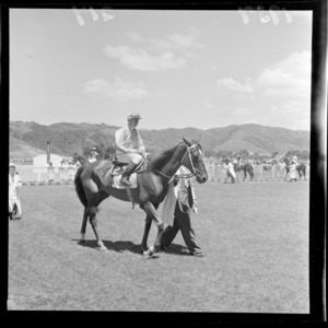 Unidentified horse and jockey at the Trentham Racecourse summer meeting
