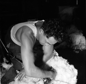 Maori sheep shearers and wool handlers at work, Wairarapa