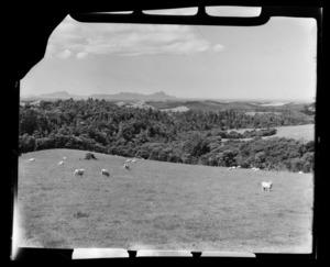 Whangarei Heads from Brynderwyn, Northland