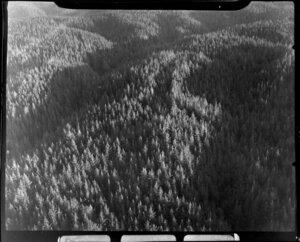 Pine forest, Atiamuri, Taupo District
