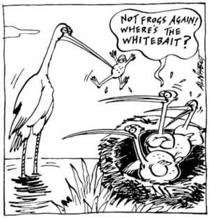 Nisbet, Alistair, 1958- :'Not frogs again! Where's the whitebait?' Christchurch Press. ca. 18 August 2002.