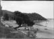 Cowes Bay, Waiheke Island